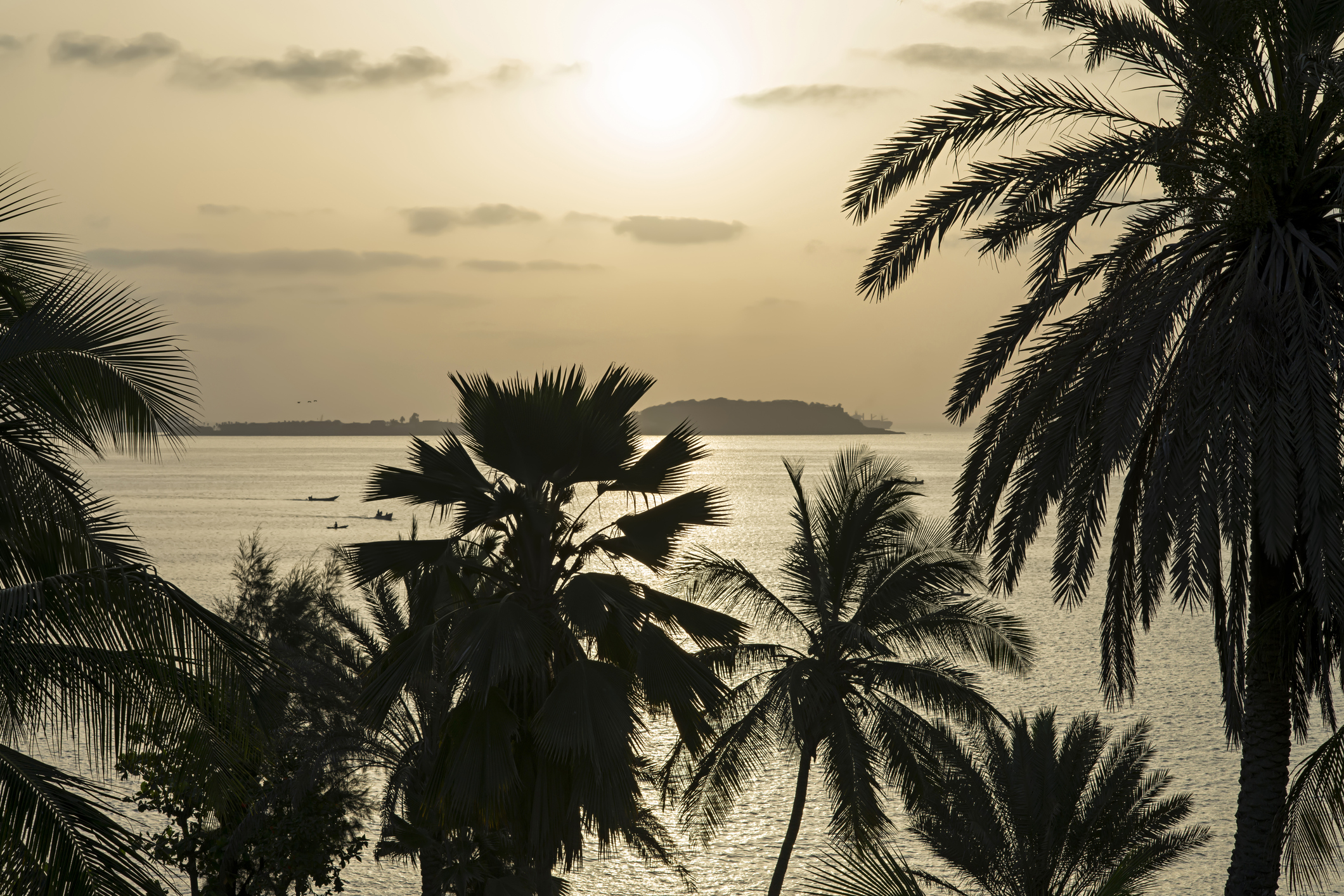Tropical sunrise – Silhouettes of coconut palm trees
